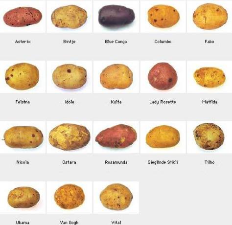 potatis18s